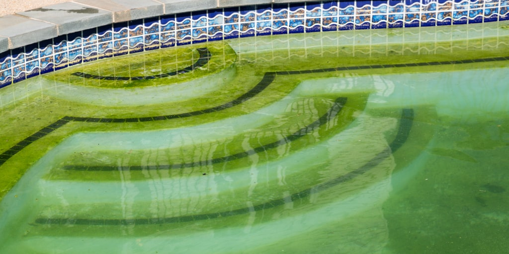Green Pool? Here's How To Clean It & Keep It That Way - Cleanup.Expert