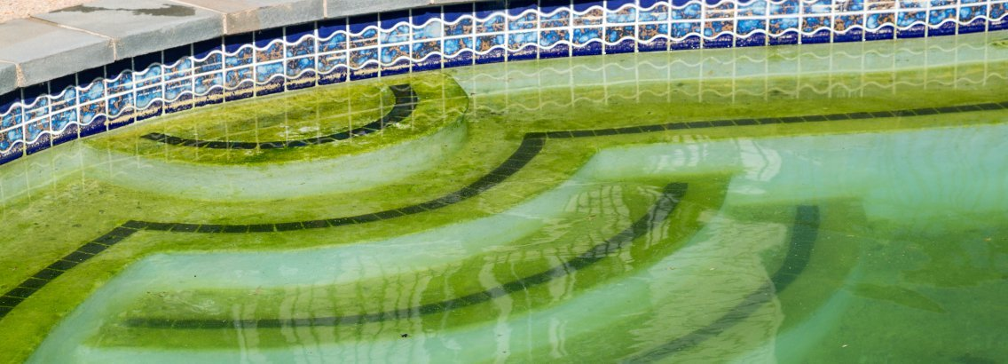 Swimming Pool & Algae