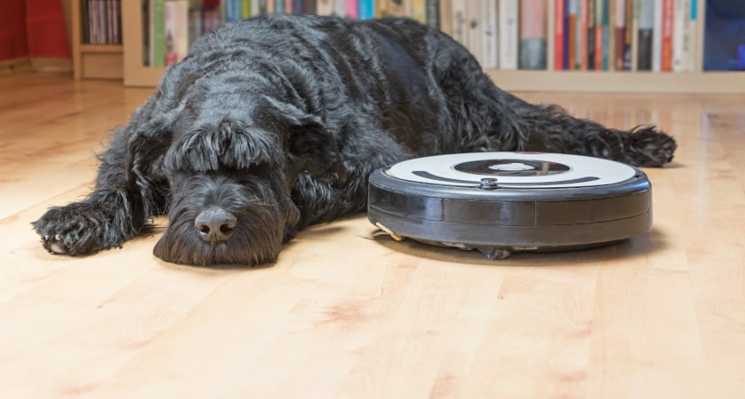 Hairy Dog & Top-rated Robotic Vacuum Cleaner