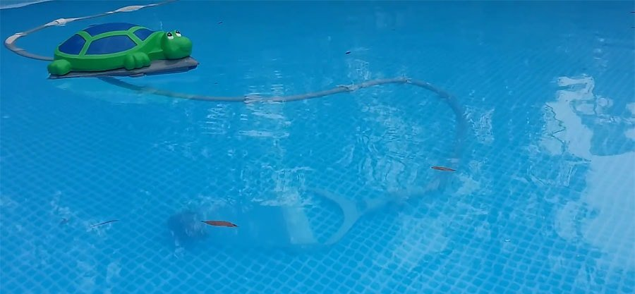 The Polaris Turbo Turtle cleaner is cleaning the pool.