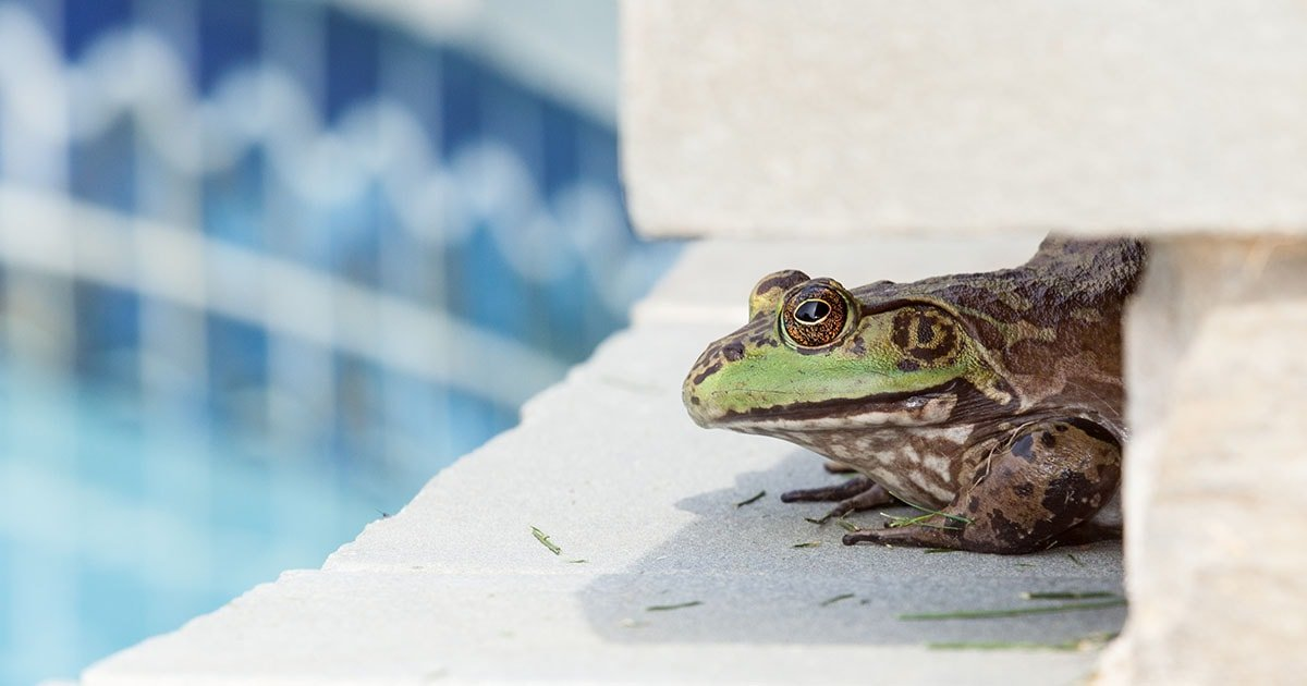 12 Ways To Keep Frogs Out Of Your Pool (2020)